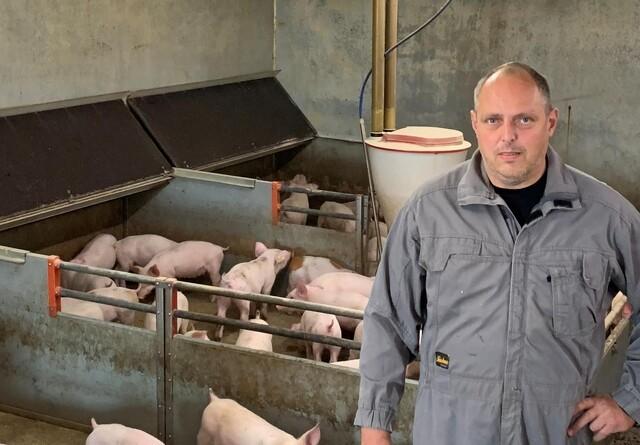 Fødevarestyrelsen bekræfter brug af ikke tilladt grise-spray under kontrol