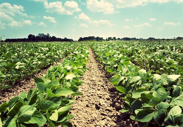 Jyske Markets: Rekordstor Brasiliansk sojaeksport