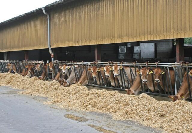 Højere mælkepriser og bedre udnyttelse af foder skaber fremgang