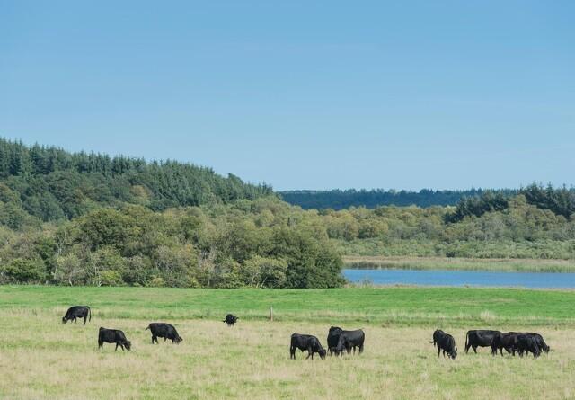 Landboforeninger: Vi har alle pligt til at passe på vores dyr - det gælder også staten