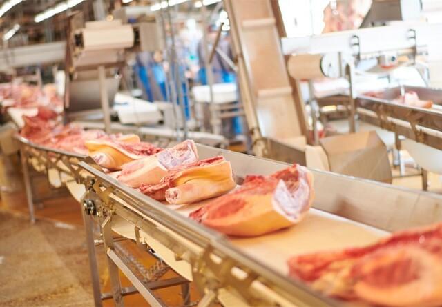 Tican sender igen svin til tyske slagterier