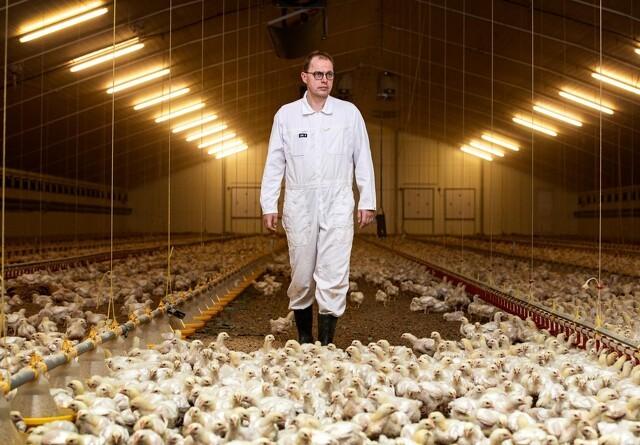 Fugleinfluenza fylder for fjerkræproducenterne