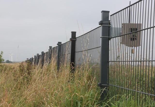 Belgien ophæver visse foranstaltninger mod afrikansk svinepest