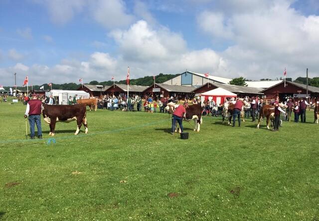 Horsens Dyrskue og Madmarked aflyses i år