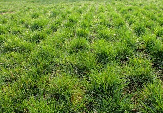 DLF's græssort med på innovationsliste