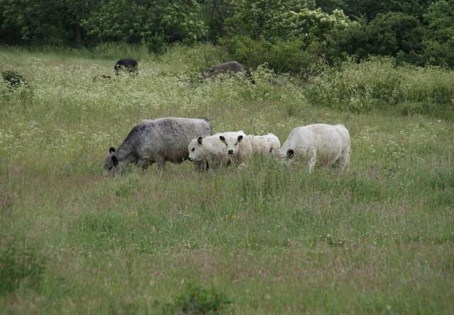 Dyrenes beskyttelse: Dyrevelfærdsloven tilsidesættes i naturnationalparkerne