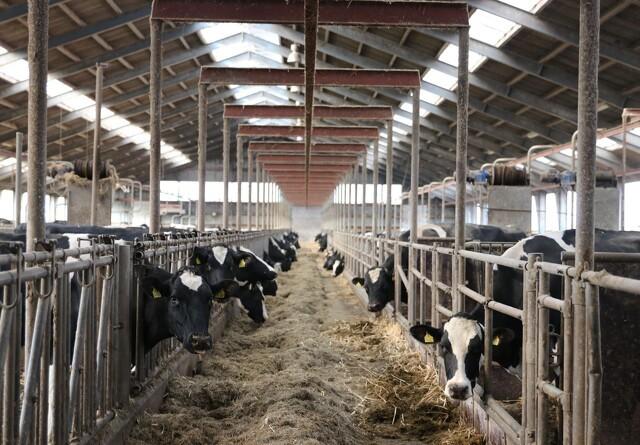 Minister vil styrke hjerteordningen om dyrevelfærd