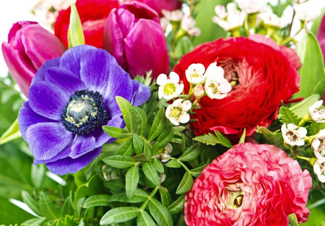 Miljøstyrelsen undersøger omfanget af pesticider i importerede blomster