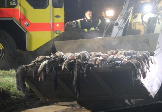 30 millioner til oprydning efter minkopgravningerne