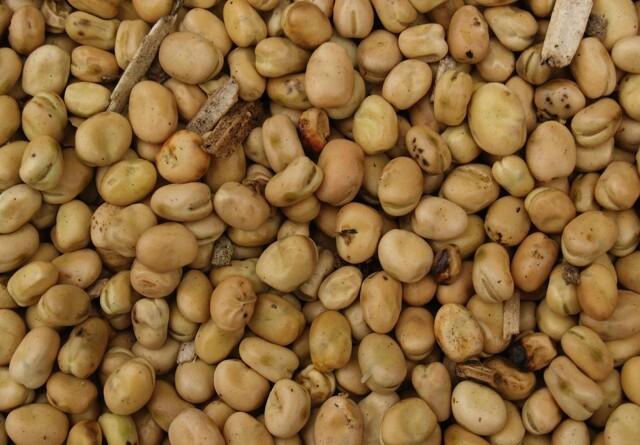 Organic Plant Protein vil udvide med dobbelt så stor fabrik