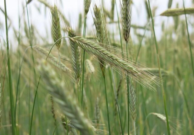 Alle landmænd skal kunne beregne gårdens klimaaftryk