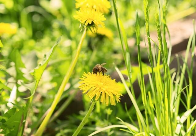 Mere biodiversitet på vej i danske skove