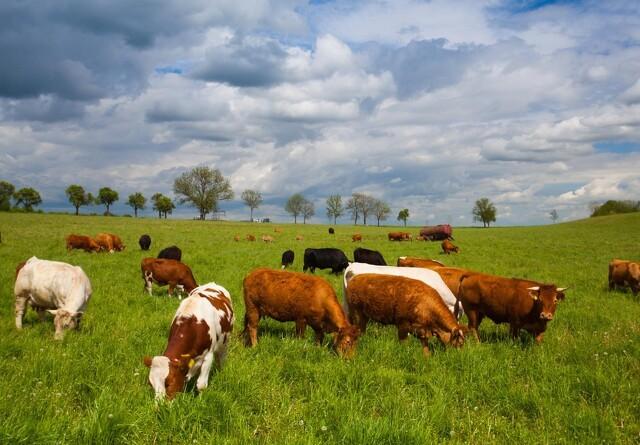 Europæisk projekt vil forbedre animalsk produktion