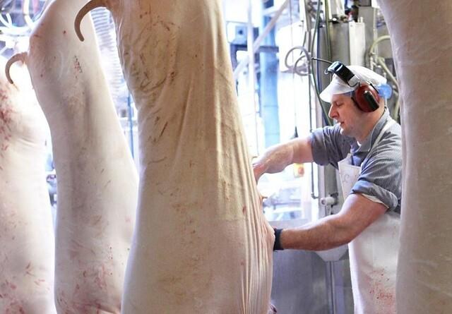 Coronaudbrud i Tyskland stopper slagtning i Danmark
