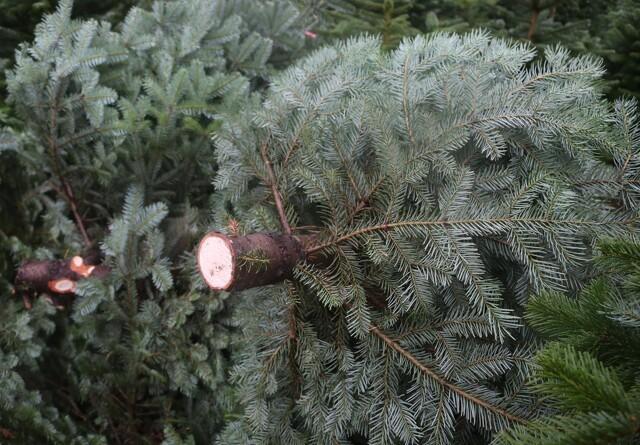 Eksport af juletræer og pyntegrønt kræver opmærksomhed på en række forhold