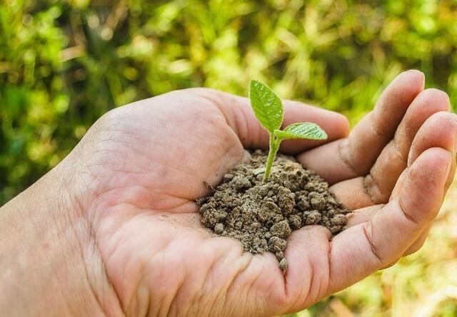 Jordens biodiversitet kan være vejen til et mere klimaresistent landbrug
