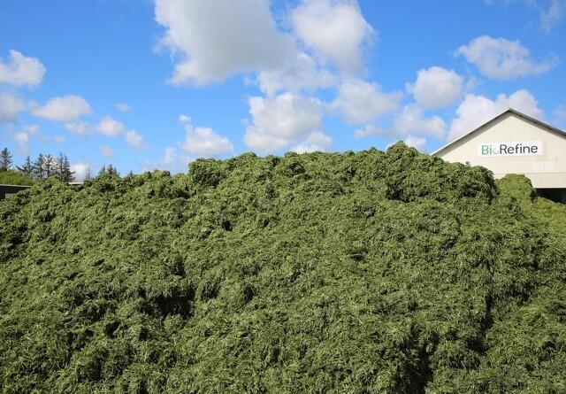 BioRefine Denmark åbner Nordeuropas største produktion af grønne proteiner