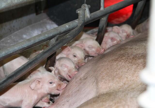 EUs landbrugsudvalg kræver svar i kampen mod ASF