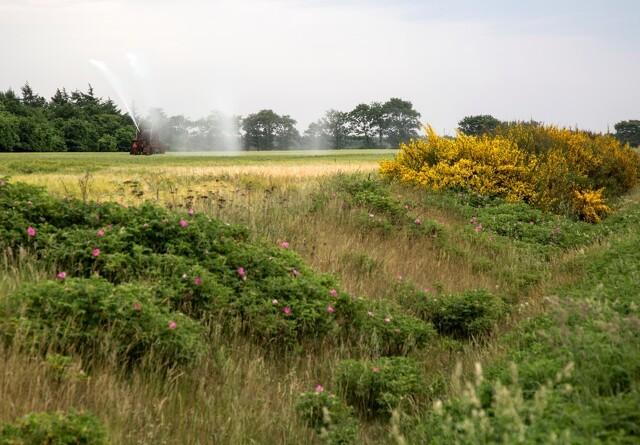Seges: Fem barrierer står i vejen for landmandens arbejde med natur og biodiversitet