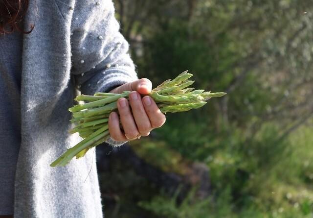 EU forlænger rettigheder til plantesorter med fem år