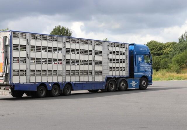 Branche om muligt loft for transporttid: Nuværende regler sikrer fin dyrevelfærd
