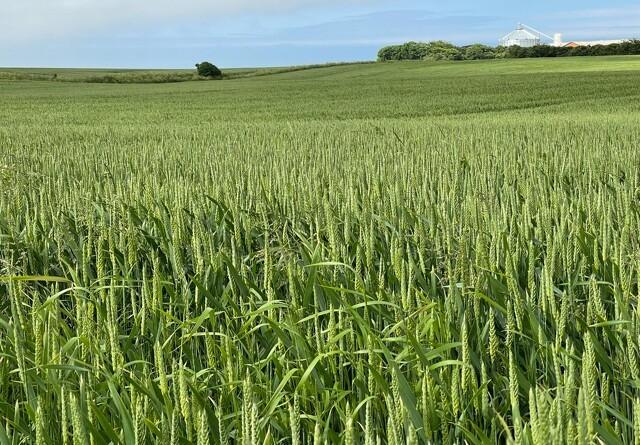 Debat: - Landbruget er vores største klimaaktiv
