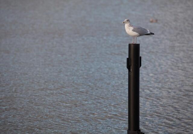 Forvaltning: Tilladelse til udledning af spildevand kan ikke trækkes tilbage