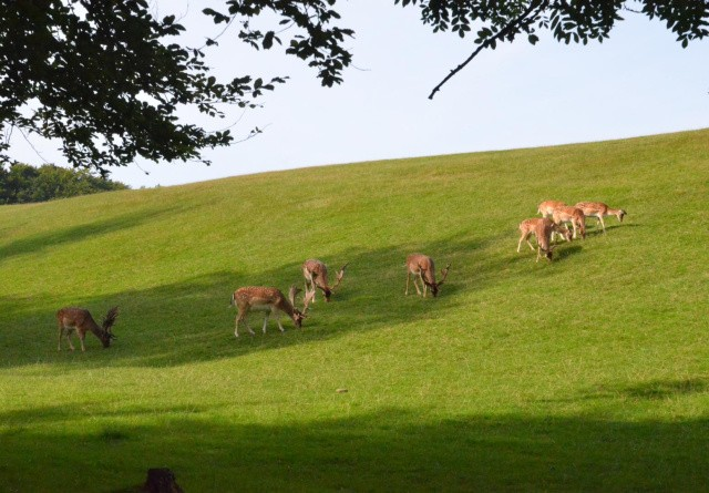Sommerferie i Danmark: Tag på safari i naturen