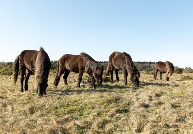 Dyrenes Beskyttelse advarer hesteejere