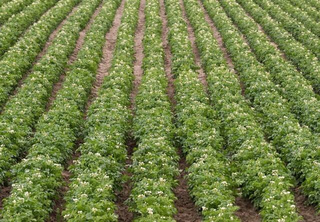 Stor nedgang i britisk økologi