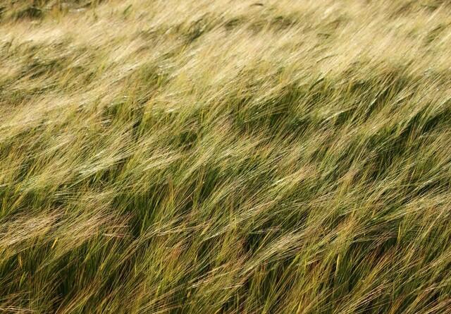 Topdanmark udvider forsikring af landmænds høstudbytte