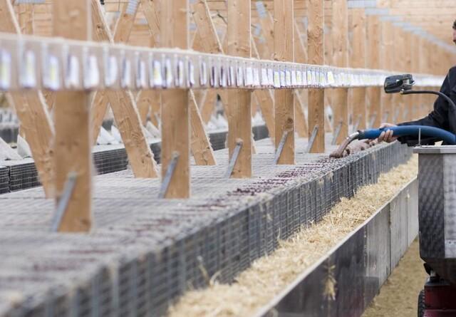 Kompensation understøtter flere minkavlere
