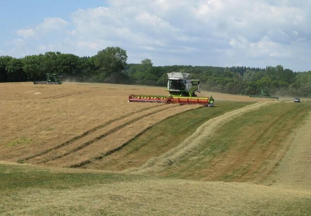 Frøavlernes indtjening for høst 2019 holder et højt niveau