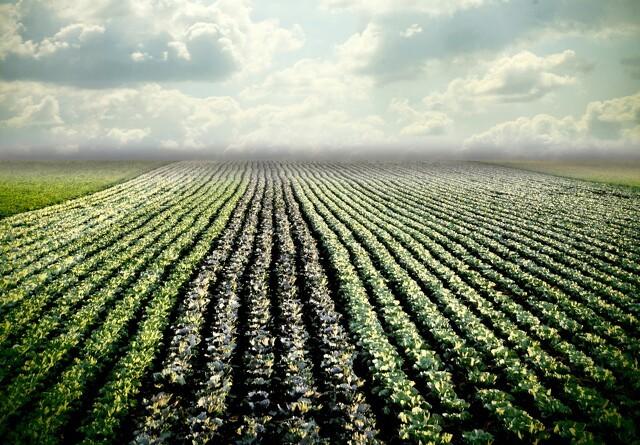Hvad mener partierne om økologi?
