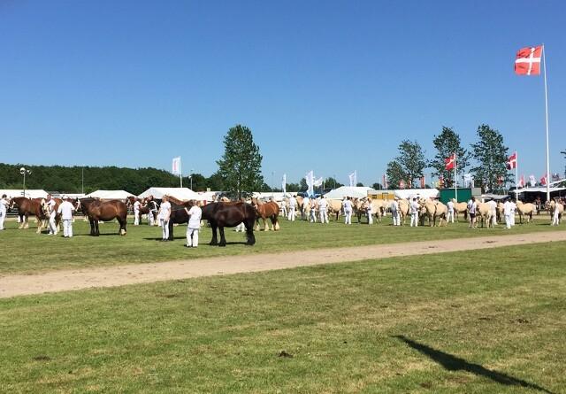 Over 15.000 gæster på Landskuets første dag