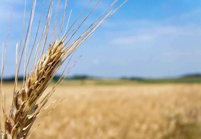 Fremtidens landbrug kombinerer bæredygtighed med produktivitet og effektivitet