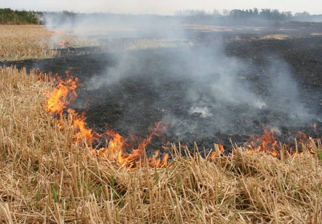 Pas på markbrande under høsten