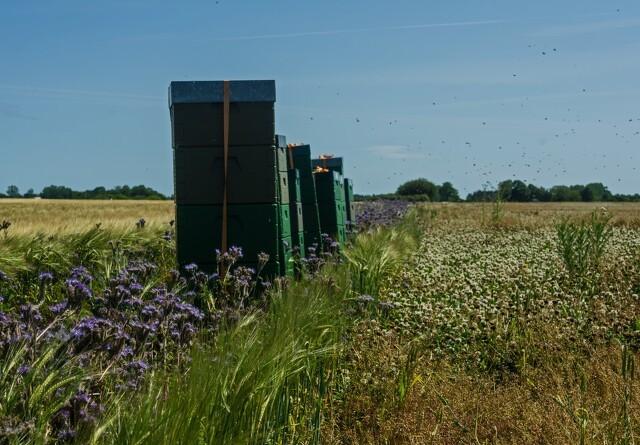 Planter for bierne og vildtet