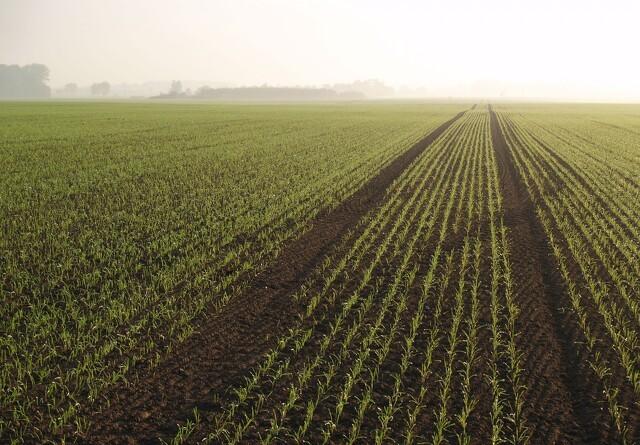Dansk opfindelse kan skære forbruget af planteværn med 95 procent