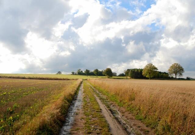 Udenlandske investorer køber billig dansk landbrugsjord