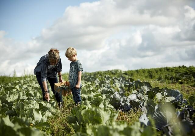 55.000 til Økologisk Høstmarked i weekenden