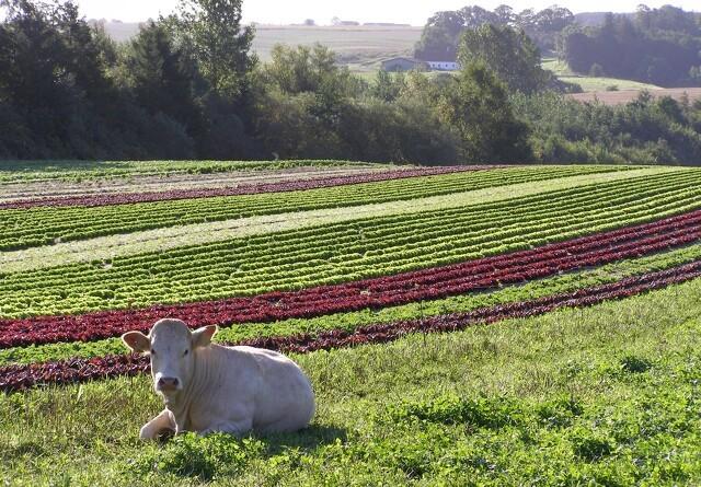 Gratis omlægningstjek til landmænd i Brønderslev