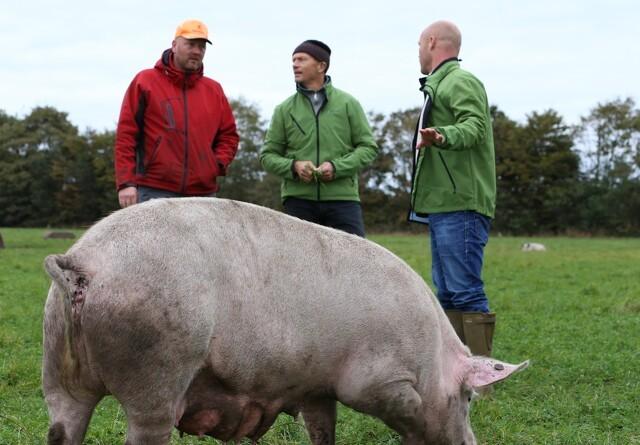 Øko-tjek til Rebild-landmænd