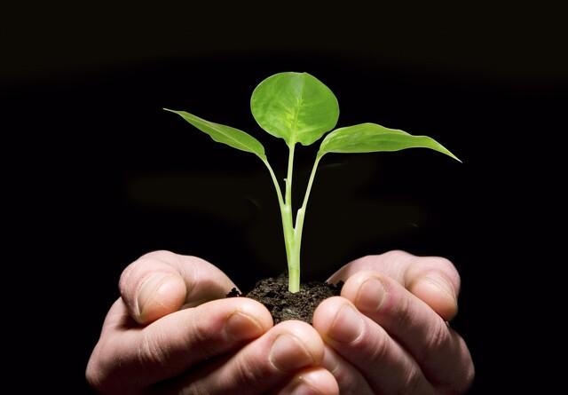 Det grønne og bæredygtige samfund