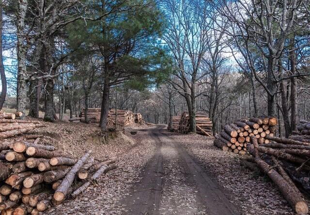 Fæld flere træer og hjælp miljøet
