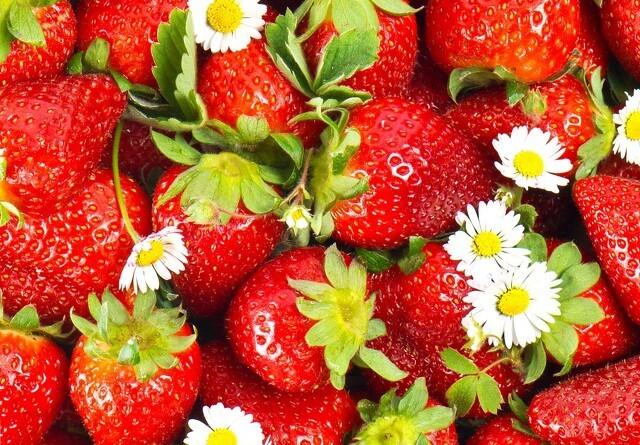 Koldt forår forsinker jordbærsæsonen