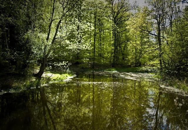 Nordjylland får naturprojekt til 100 millioner