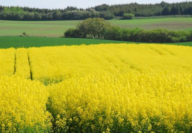 Styrelse afviser landmands brug af pesticid