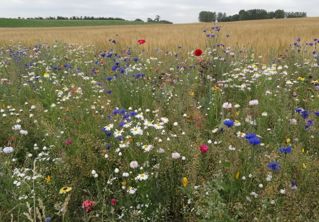 Blomster-app skal styrke landmændenes image