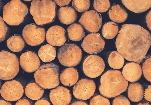 Husk muligheden for tilskud til skovrejsning